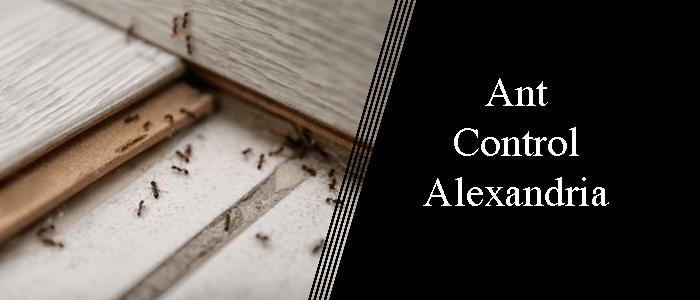 Ant Control Alexandria