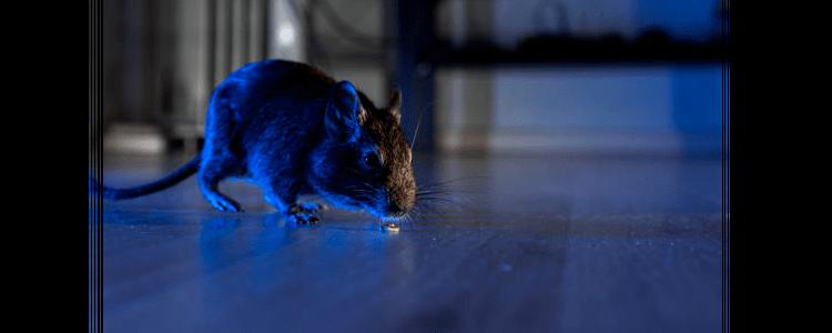Rodent Control Alexandria
